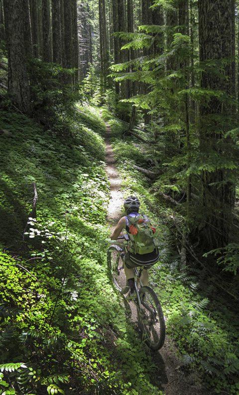Mountain Biking on the McKenzie River Trail